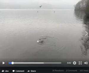 Otter video snapshot